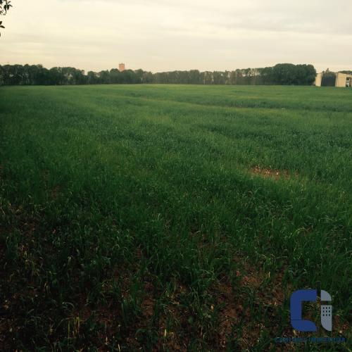 Terrain Urbanisable à vendre à sidi rahal1290000sidi rahal1290000